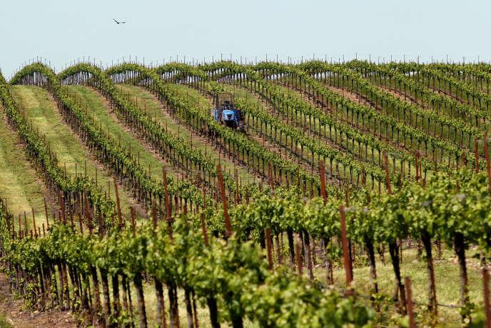Vignes près de Galt (Californie), en 2010.