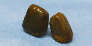 Des crottes extraites de l'intestin d'un wombat.
