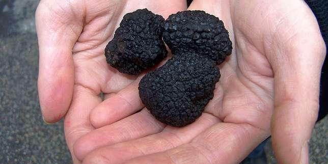 Truffes noires.