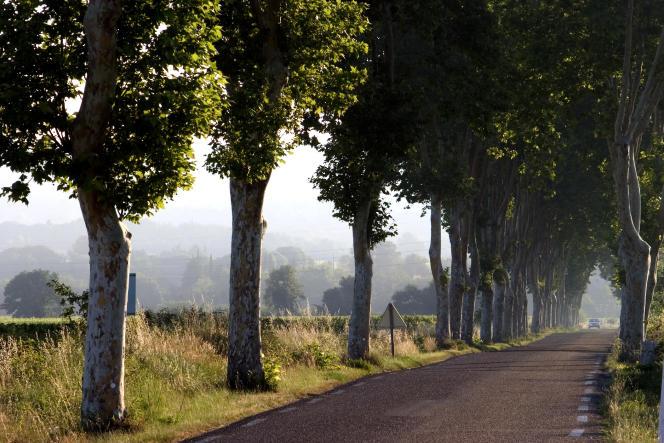 Sur une départementale entre Nîmes et Uzès, dans le Gard.
