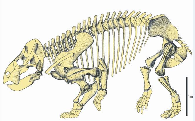 Reconstitution du squelette de« Lisowicia bojani».