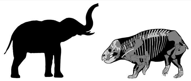Comparaison de« Lisowicia bojani» et d'un éléphant récent.