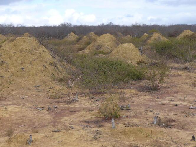 La construction de ces monticules remonte à l'époque de l'Egypte ancienne, il y a près de quatre mille ans.
