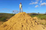 Une termitière de 230 000 km2 découverte au Brésil.