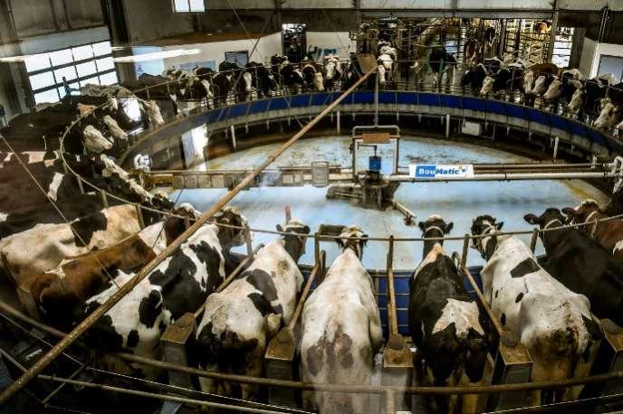 «La vraie alternative n'est pas entre protéines animales et végétales mais entre production industrielle de viandes et de céréales d'un côté et défense d'une agriculture paysanne et d'un élevage paysan d'un autre côté» (Ferme intensive à Drucat, dans la Somme, en 2017).