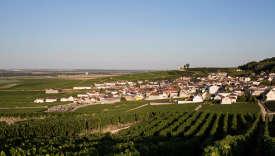 A Verzenay (Marne), « cru » situé sur le versant nord de la montagne de Reims, l'essentiel des 416 hectares sont plantés en pinot noir et chardonnay.