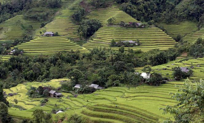 Les rizières en terrasse à Hoang Su Phi, toutes proches du Mont Kiou Liou Ty qui culmine à 2400 mètres, au nord du Vietnam.