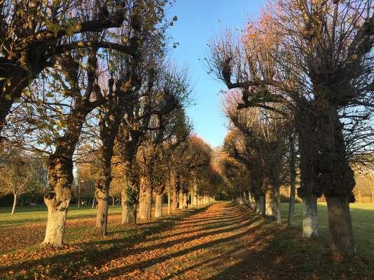 L'allée plantée de tilleuls, dans le parc du château de Bénouville.