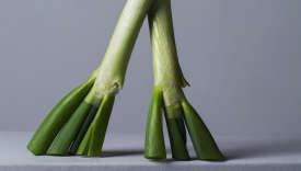 « Tout ce vert est précieux et utile, c'est là où se concentrent les saveurs affirmées du légume.»