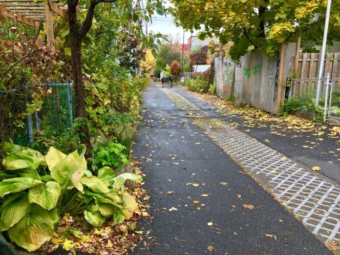 Une ruelle verte «démineralisée» dans l'arrondissementRosemont-LaPetite-Patriede Montréal, le 24 octobre.