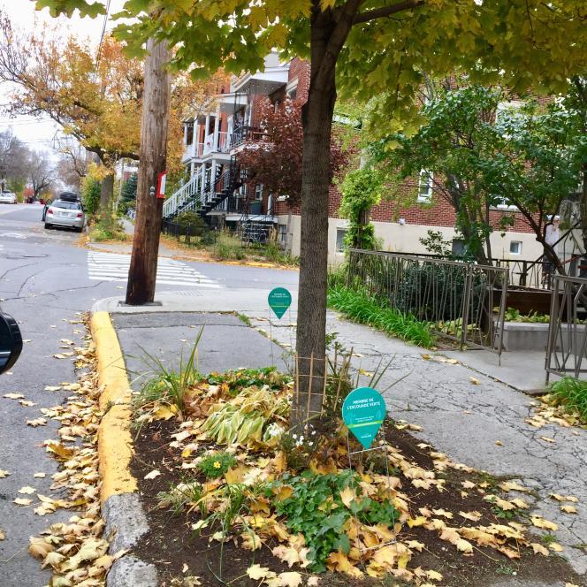 A Montréal, dans l'arrondissement Rosemont-La Petite-Patrie, les riverains cultivent les espaces publics devant chez eux. Plus de 552 de ces mini-jardins citoyens ont été créés dans l'arrondissement.