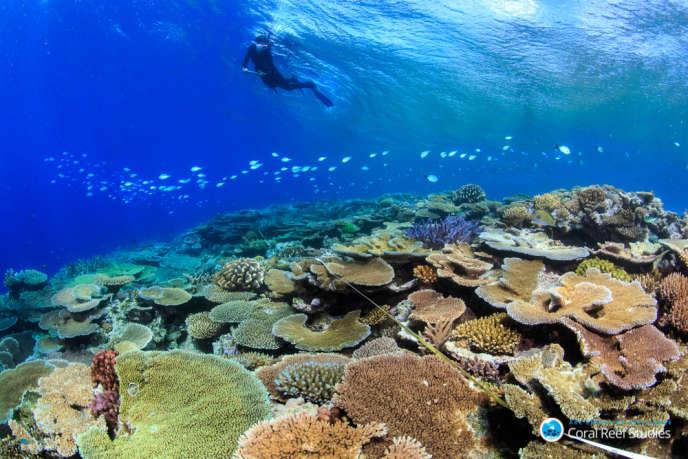 Un plongeur inspectant les récifs de la Grande Barrière de corail, au large des côtes australiennes, en octobre 2016.
