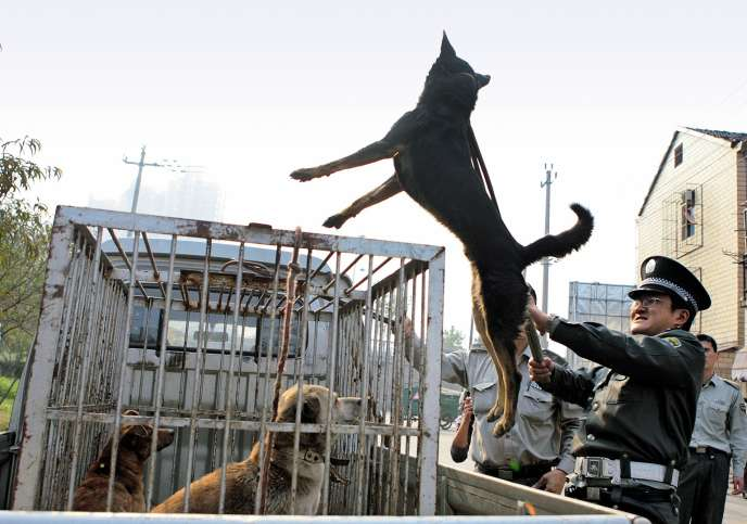 Capture de chiens errants, à Hangzhou, en 2006.
