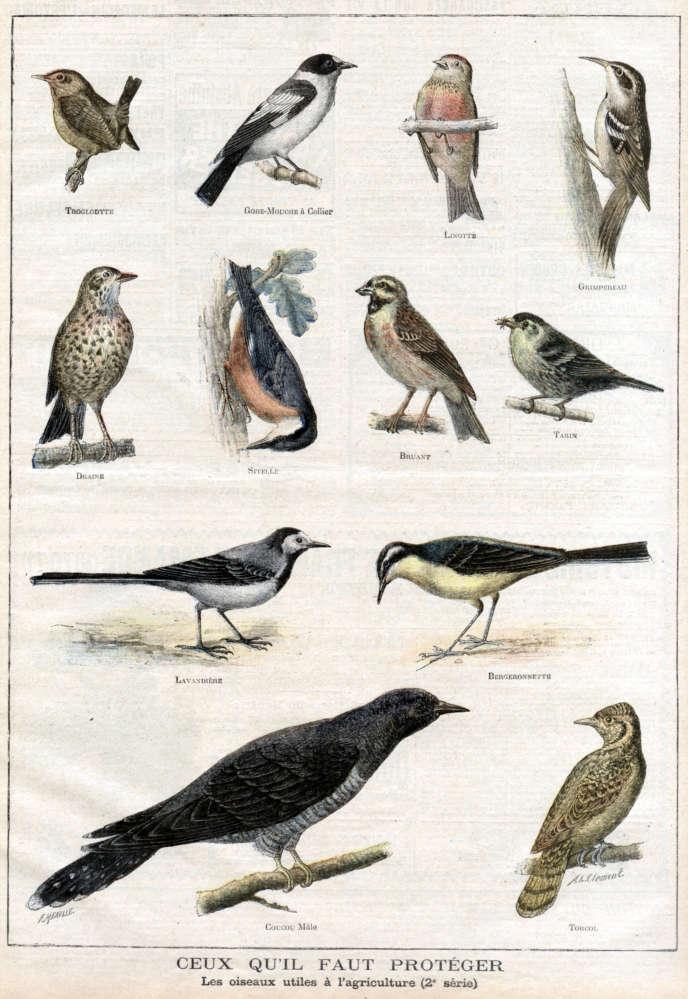 Les oiseaux utiles à l'agriculture qu'il faut protéger. Illustration de Clément pour «Le petit Journal illustré»(1897).