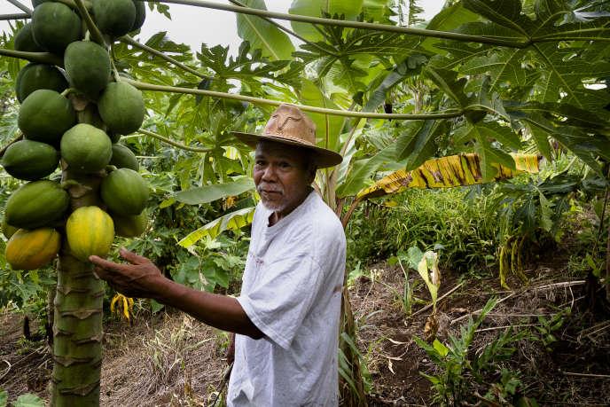 Charles Williams, le chef de la communauté kalinago, sur l'île de la Dominique, exploite une terre en polyculture: bananes, papayes, gingembre et oranges.