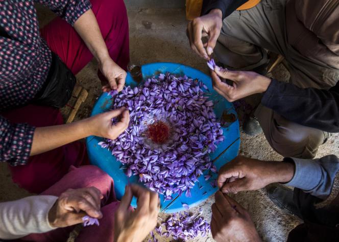 Des travailleurs trient et nettoient des fleurs de safran dans la région de Taliouine, au Maroc, le 7novembre 2018.