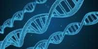 Brins d'ADN.