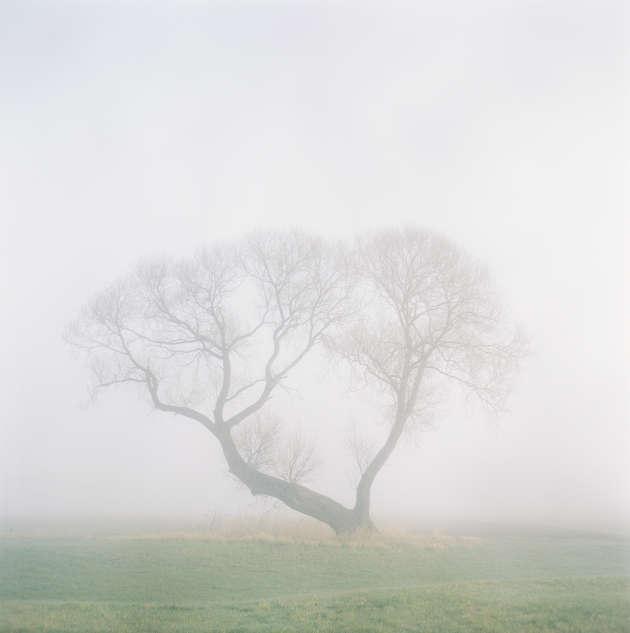 Baum 1532/7, image extraite de la série Baum, 2017.