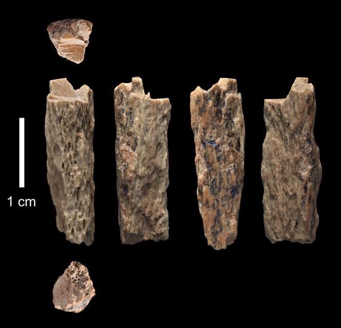 Fragment d'un os ayant appartenu à une jeune fille issue de l'union d'une mère néandertalienne et d'un père dénisovien.