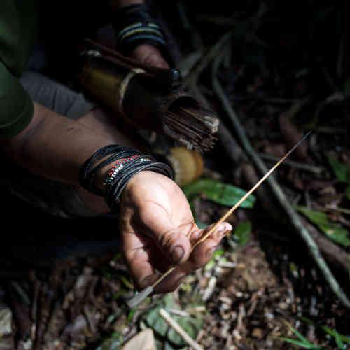 Peng Mengut montre une flèche enduite de tajem, le poison traditionnel penan, extrait de la sève d'un arbre. Avec son fils aîné Udi, il est l'un des derniers Penan à utiliser cette méthode traditionnelle de chasse.