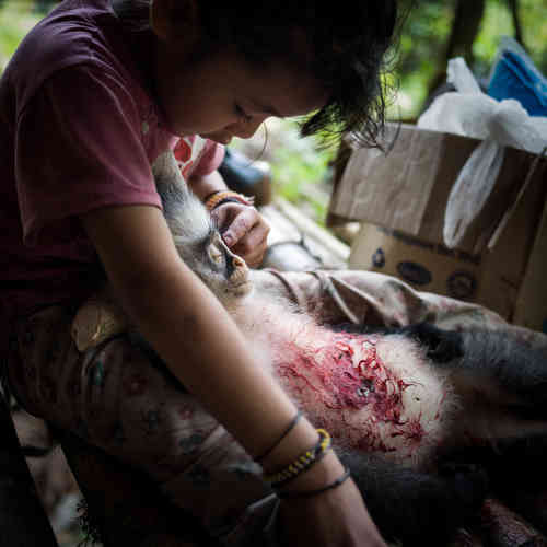 Le gibier est abondant dans la forêt. La communauté se nourrit avec les animaux ramenés de la chasse.