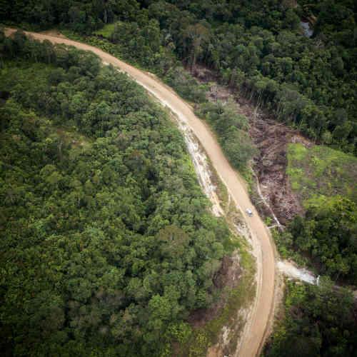 Vue aérienne de l'extension de la route reliant Miri à Ba Kelalan, avant l'atterrissage à Bario.La forêt abrite une centaines d'espèces animales, dont plusieurs dizaines sont endémiques à Bornéo.