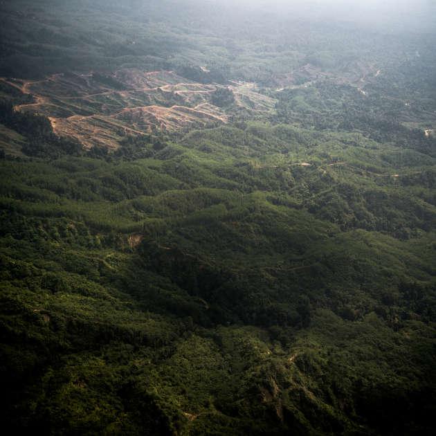 La forêt abrite une centaine d'espèces animales, dont plusieurs dizaines sont endémiques à Bornéo. Les photos qui accompagne ce reportage sont inédites. Elles ont étéréalisées par les photojournalistes Isabelle Ricq et Christian Tochtermann, sont extraites d'un projet de livre (sortie prévue en 2019) en mémoire à l'activiste écologiste suisse Bruno Manser, disparu au Sarawak en 2000.