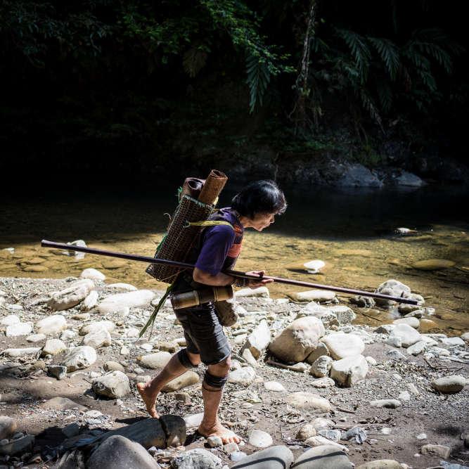 Long Tevenga, le 18 juillet 2018. Peng Mengut est l'un des derniers représentants de chasseurs-cueilleurs que compte encore l'ethnie Penan de Sarawak.