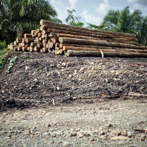 Coupes de bois sur la route forestière qui relie Limbang à Long Seridan.