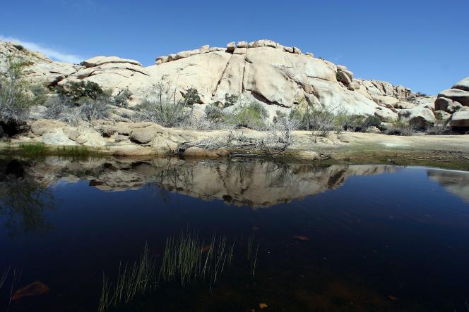 Vue du parc national de Joshua Tree, en Californie.