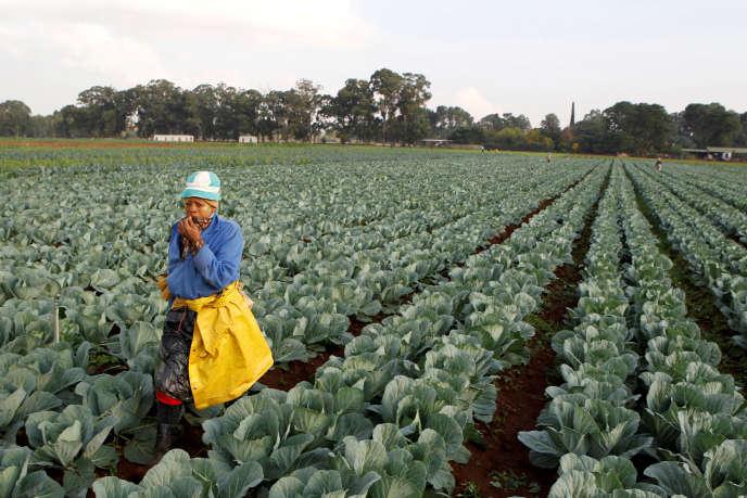 Une travailleuse agricole sud-africaine à Eikenhof, au sud de Johannesburg, en avril 2012.