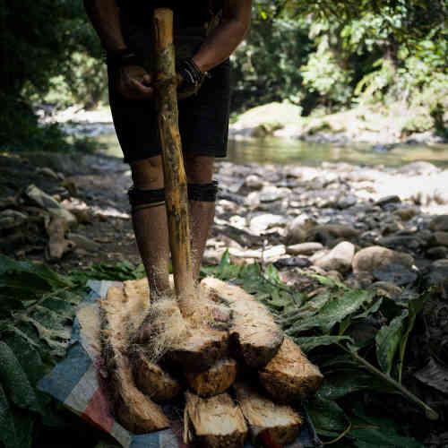 Le sago est la nourriture traditionnelle des Penan. Elle provient du tronc du sagoutier, dont on extrait une fine farine des fibres.