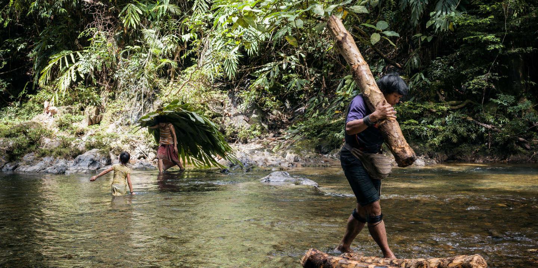 Dans la jungle de Bornéo, tribus rebelles contre bulldozers