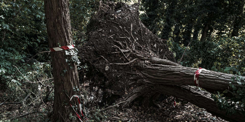 Septembre 2018. Après plusieurs années de statu quo, la région Ile-de-France a décidé de lancer à l'automne des travaux d'aménagementdu site pour créer une base de loisirs à 2 kilomètres de Paris. Des rubans rouge et blanc délimitent plusieurs zones. Les premiers arbres commencent à tomber.