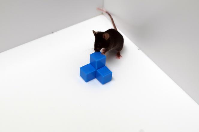 Test de mémorisation dans le laboratoire de Hiroshi Nomura, à l'université de Tokyo.