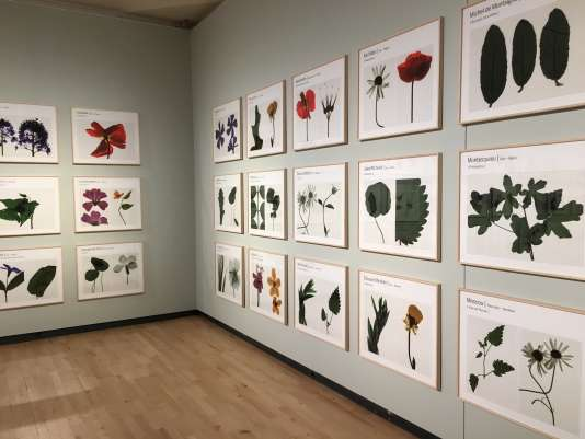 Dans la première partie de l'exposition de Suzanne Lafont, « Nouvelles espèces de compagnie. Roman».