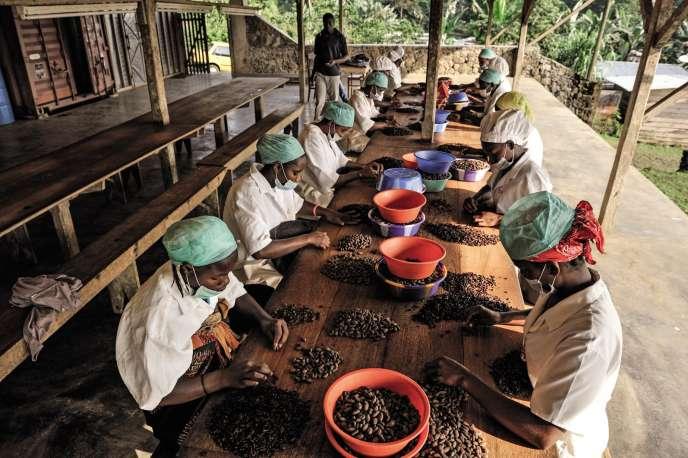 Terreiro Velho une plantation de cacao à Principe.