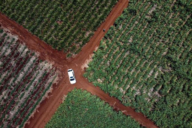 Les champs duplus grand producteurde canne à sucre d'Afrique du Sud, Charles Senekal, près de Mkuze.