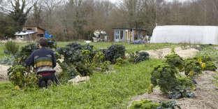 Maraîchage et jardin partagé, sur la ZAD de Notre-Dame-des-Landes, le 15 janvier.