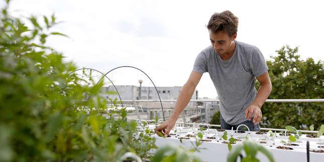 Culture de légumes et d'herbes aromatiques, sur le toit d'un immeuble de la RATP, en 2017.