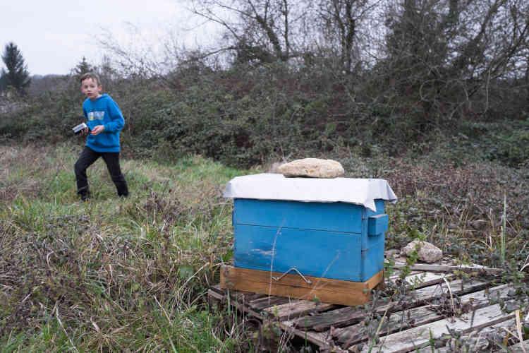 Les abeilles de la famille ont été dévorées par les frelons l'été dernier.