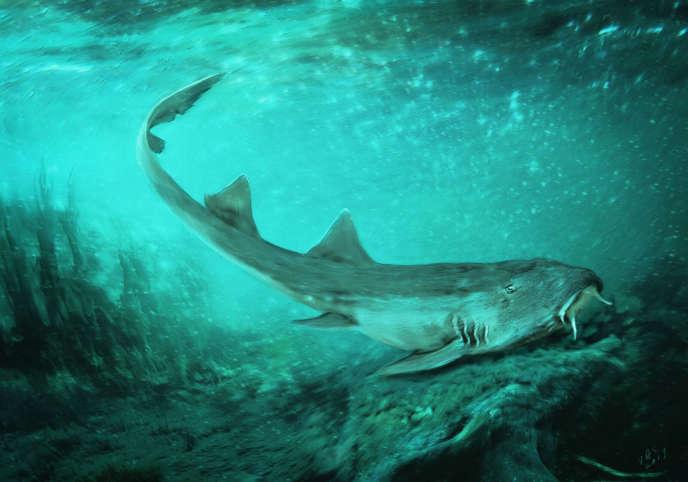 Illustration du requin préhistoriqueGalagadon norsquistae.