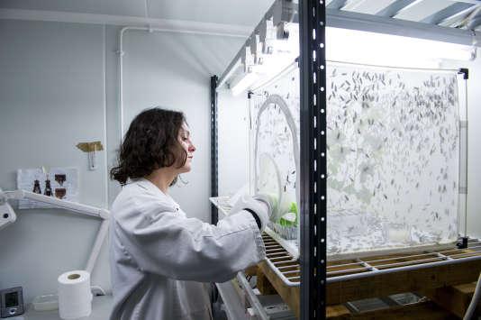 A l'Institut de recherche sur la biologie de l'insecte de Tours, jeudi 24 janvier 2019.