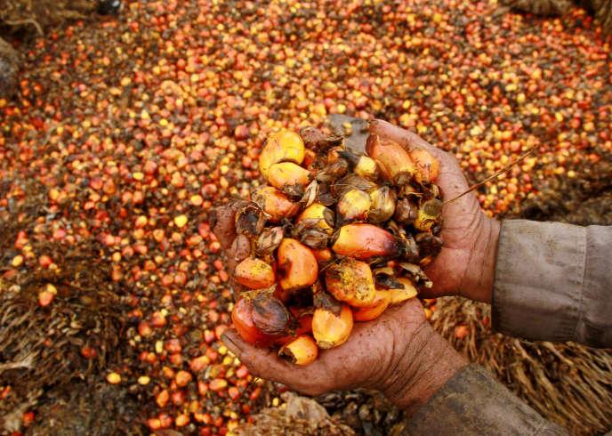 Des fruits de palmier à huile dans une plantation du village de Topoyo, en Indonésie, en mars 2017.