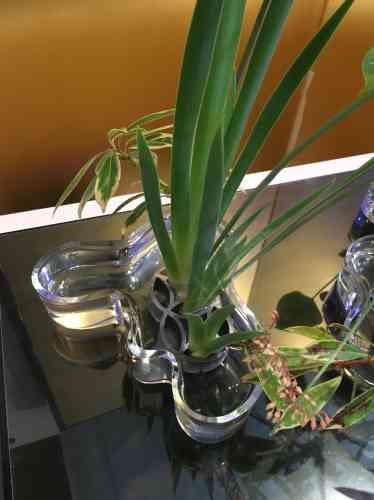 Le récipient utilisé, original, est un vase du designer finlandais Alvar Aalto. Le support des plantes est un« shippo» double en métal.