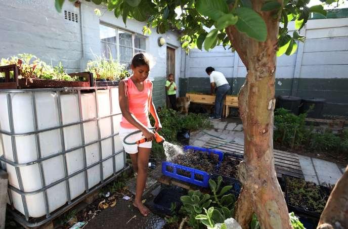 Des habitants du township de Hanover Park, au Cap, font pousser des légumes dans des caissons en bois.
