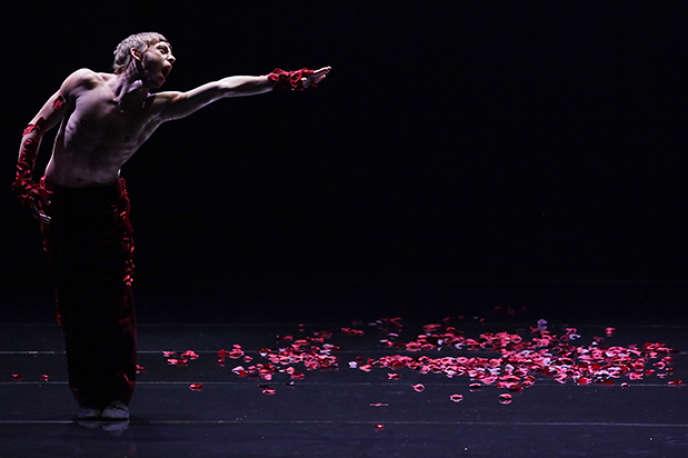 « Le Spectre de la rose», chorégraphie et scénographie de Marco Goecke pour les Ballets de Monte-Carlo au Théâtre des Champs-Elysées à Paris.