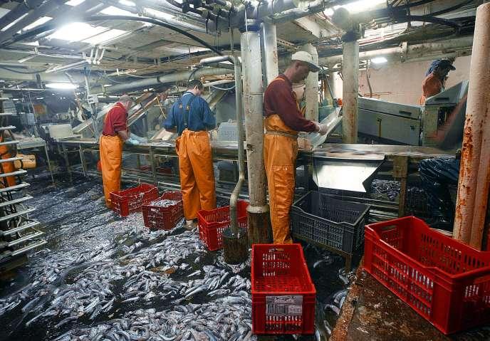Pêche industrielle de merlan sur le chalutier français « Joseph Roty II», en Ecosse, en janvier 2004.