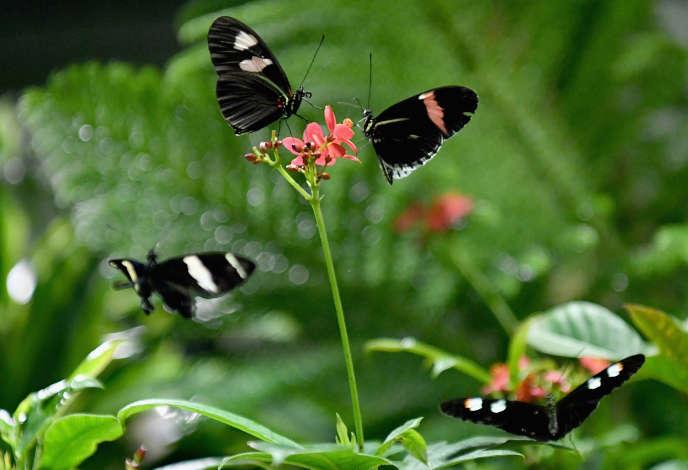 Le nombre d'espèces de papillons a chuté de 58 % sur les terres cultivées en Angleterre entre 2000 et 2009.