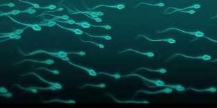 Simulation du déplacement de spermatozoïdes.